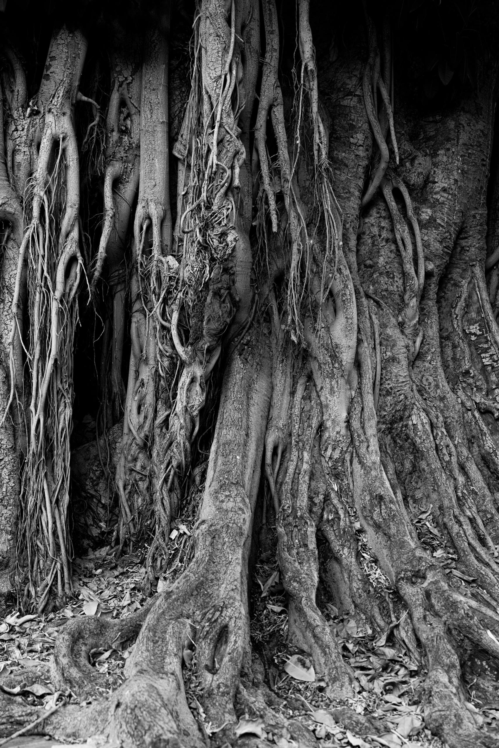 Spooky tree, Seville 205 9/2019 - notabene   ello