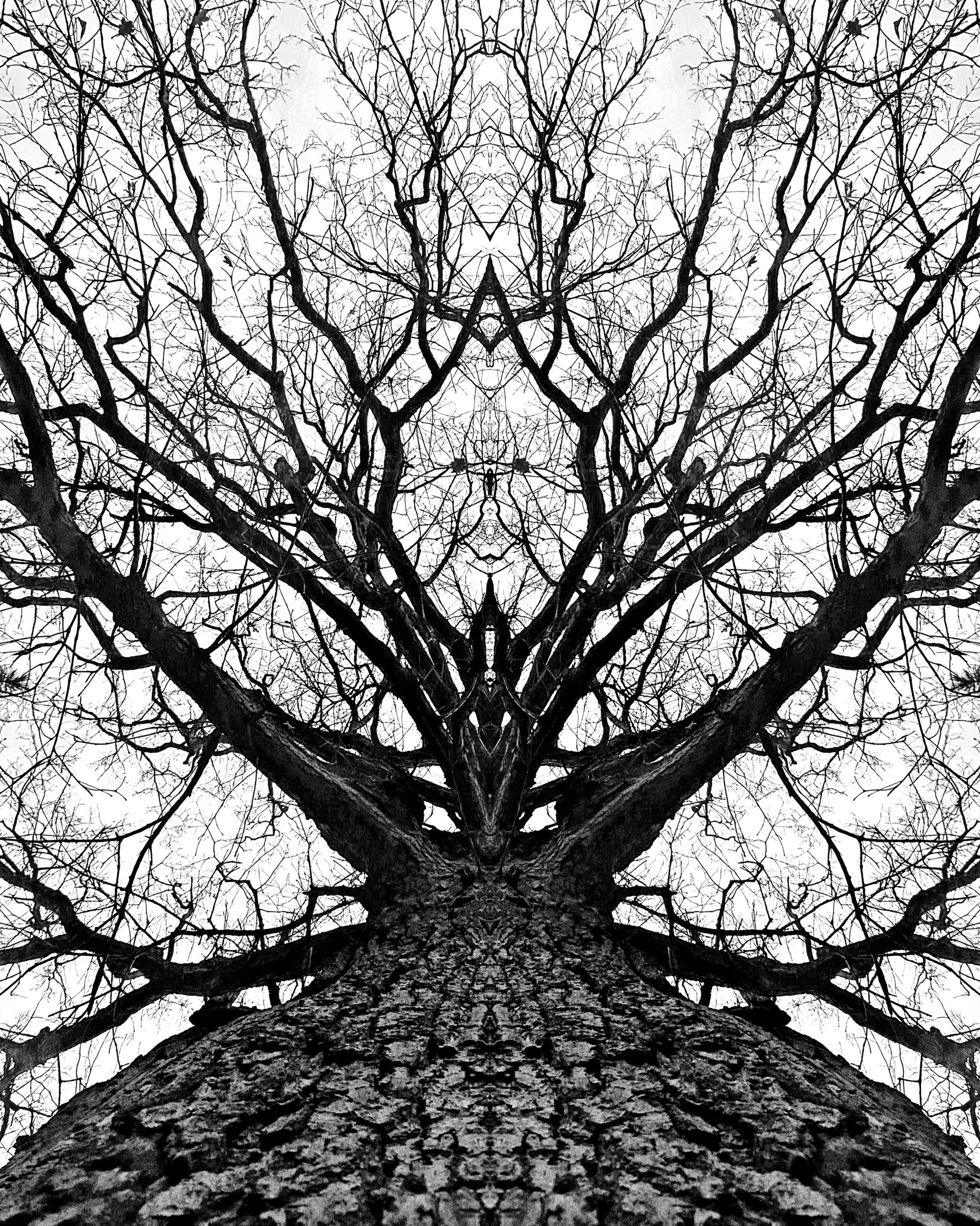 kingdom trees - photography - kenlong | ello