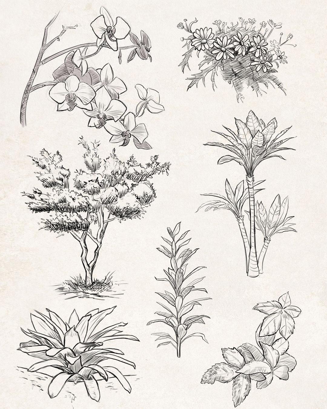 Sketches: Plants 3 plants - inktober - manfredrohrer   ello