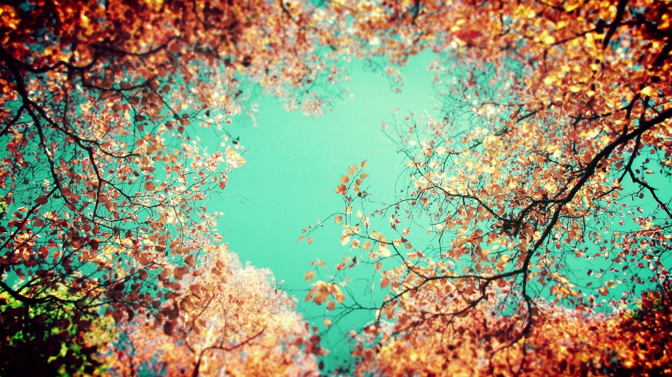 Feelings - Autumn, outdoor, nature - fusionatic | ello