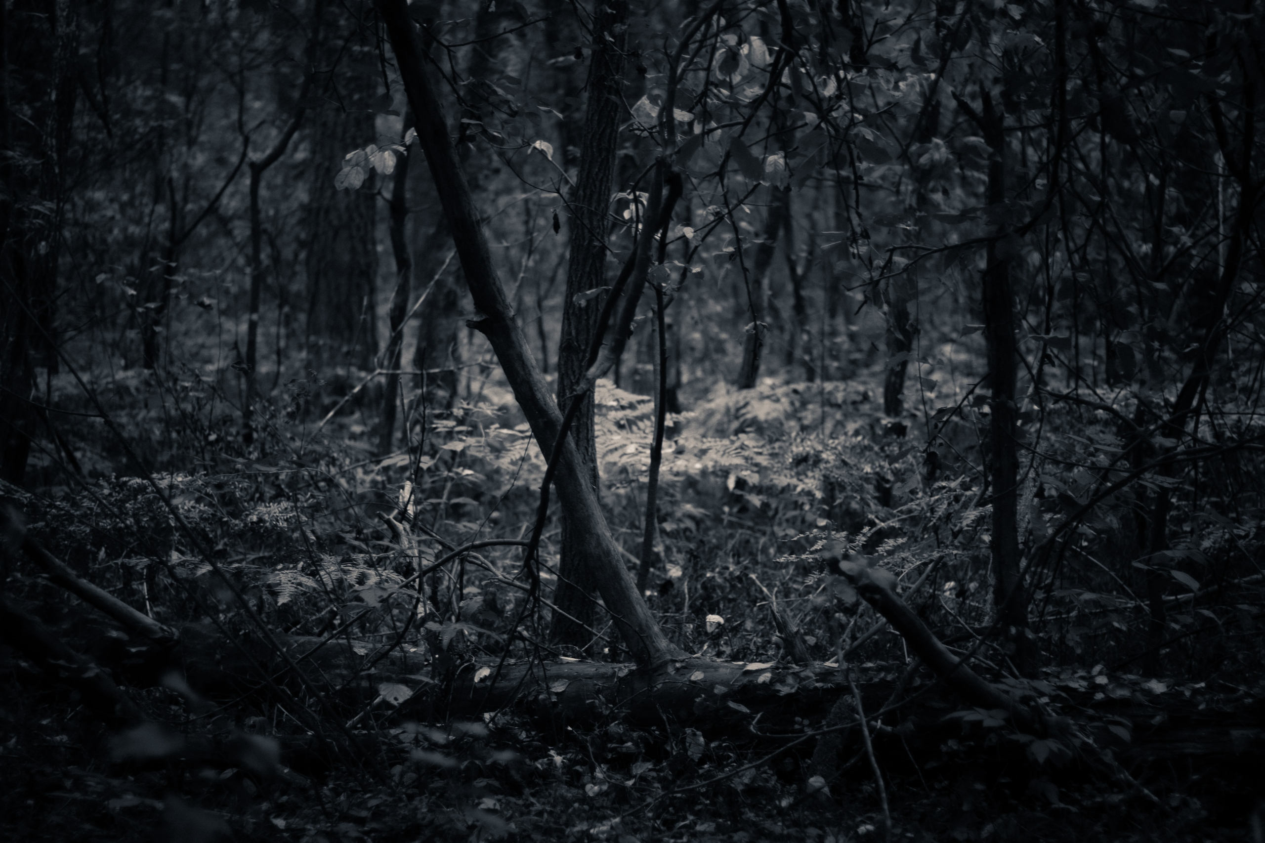 lithuania, lietuva, лес, forest - beheroght   ello
