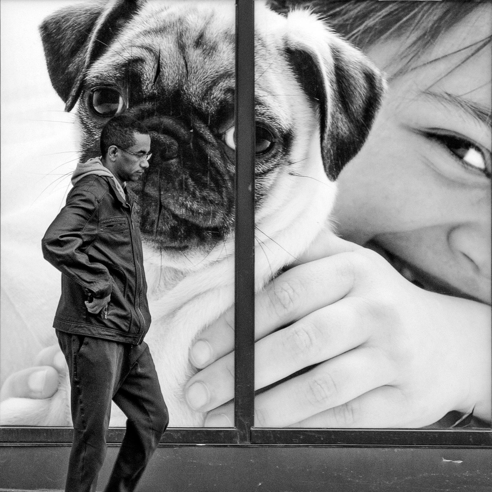 Pug Life - streetphotography, street - jeff_day   ello
