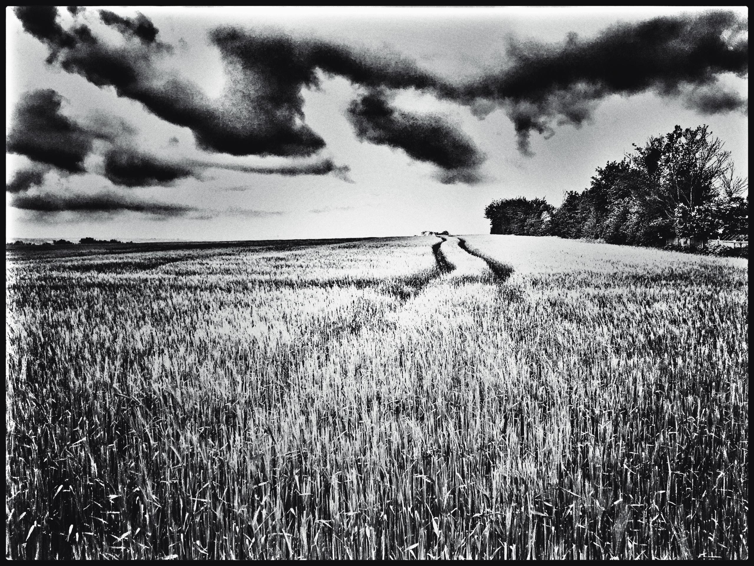 Barley (2021 - phil_levene   ello
