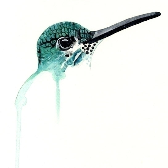 hummingbird...#illustration art - meganjurcak | ello