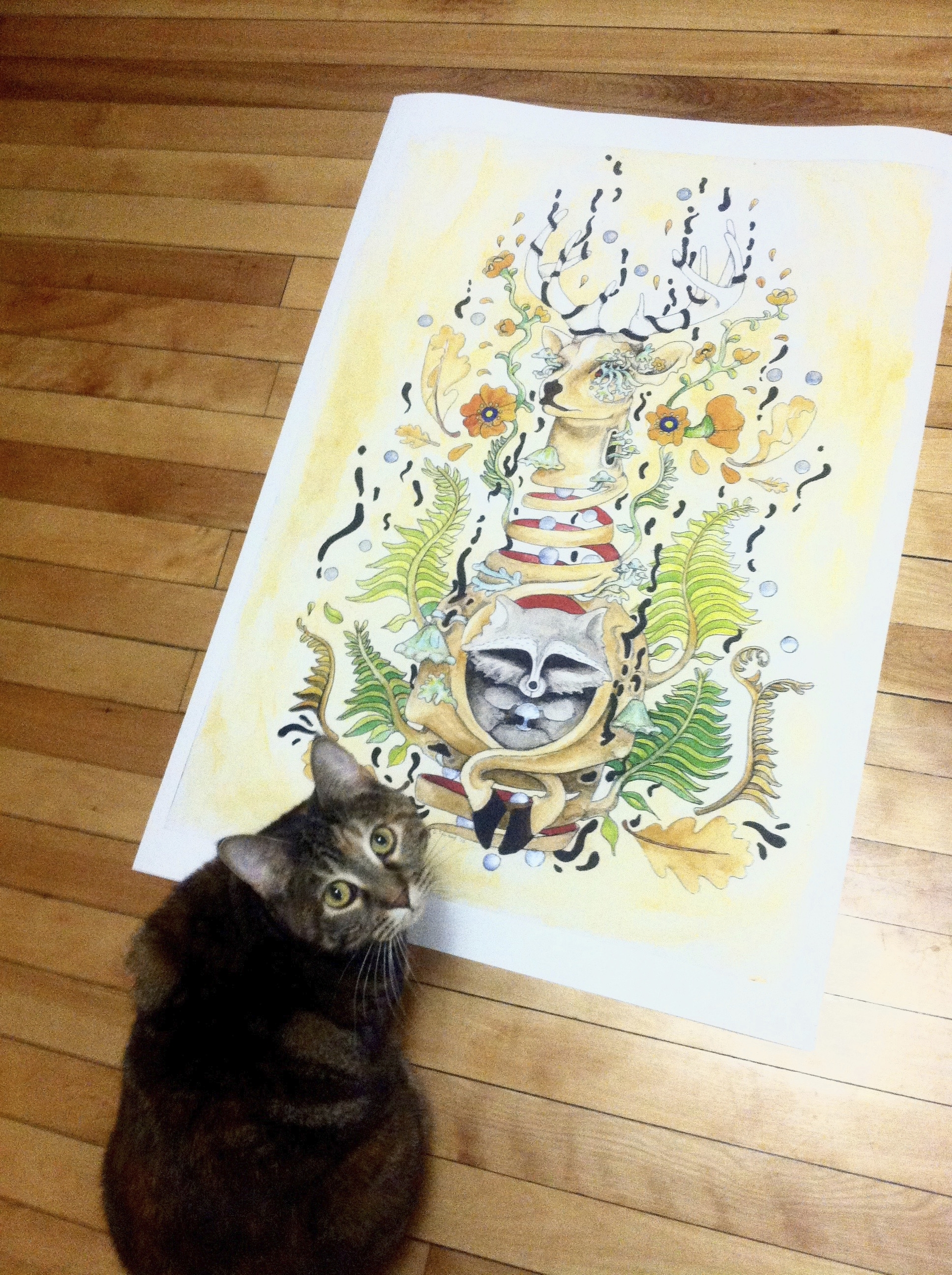Georgie proofin' work. cats big - opodesign | ello