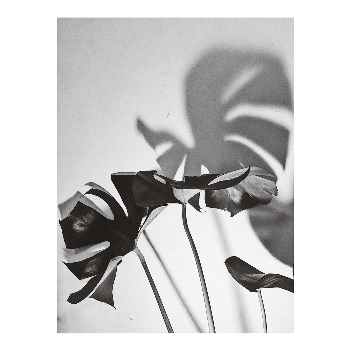 Today bw minimal photography pl - filmarra   ello