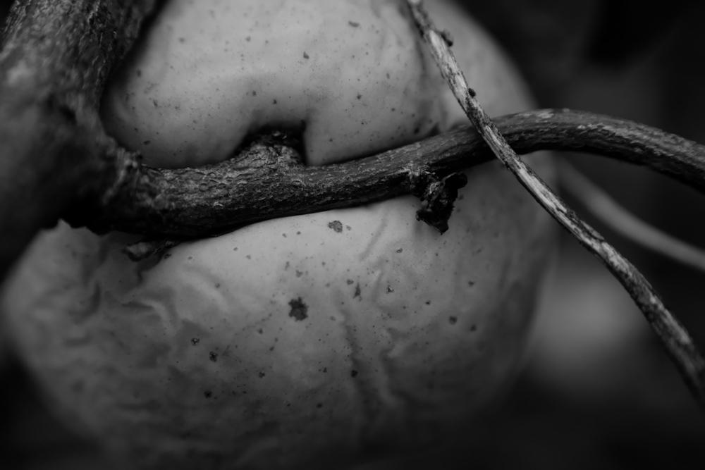 Limitations photography - marcushammerschmitt | ello