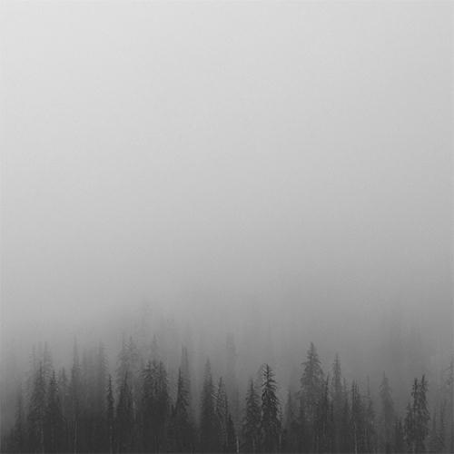 Forest haiku memoir / Kashyapi  - kashyapi | ello