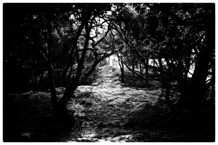 PATH   lead - photography, photo - delafoi   ello