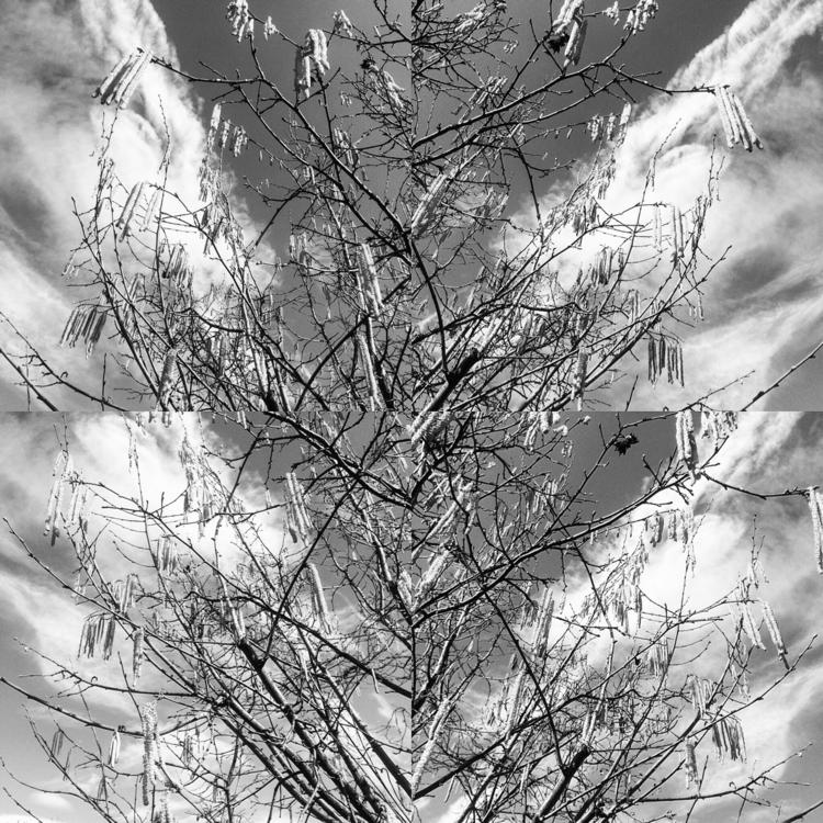 Scent Spring [Random digital co - lauravisigalli   ello