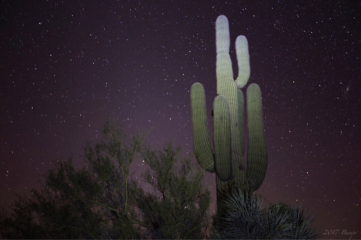 Saguaro starlight  - saguaro, cactus - bamps | ello