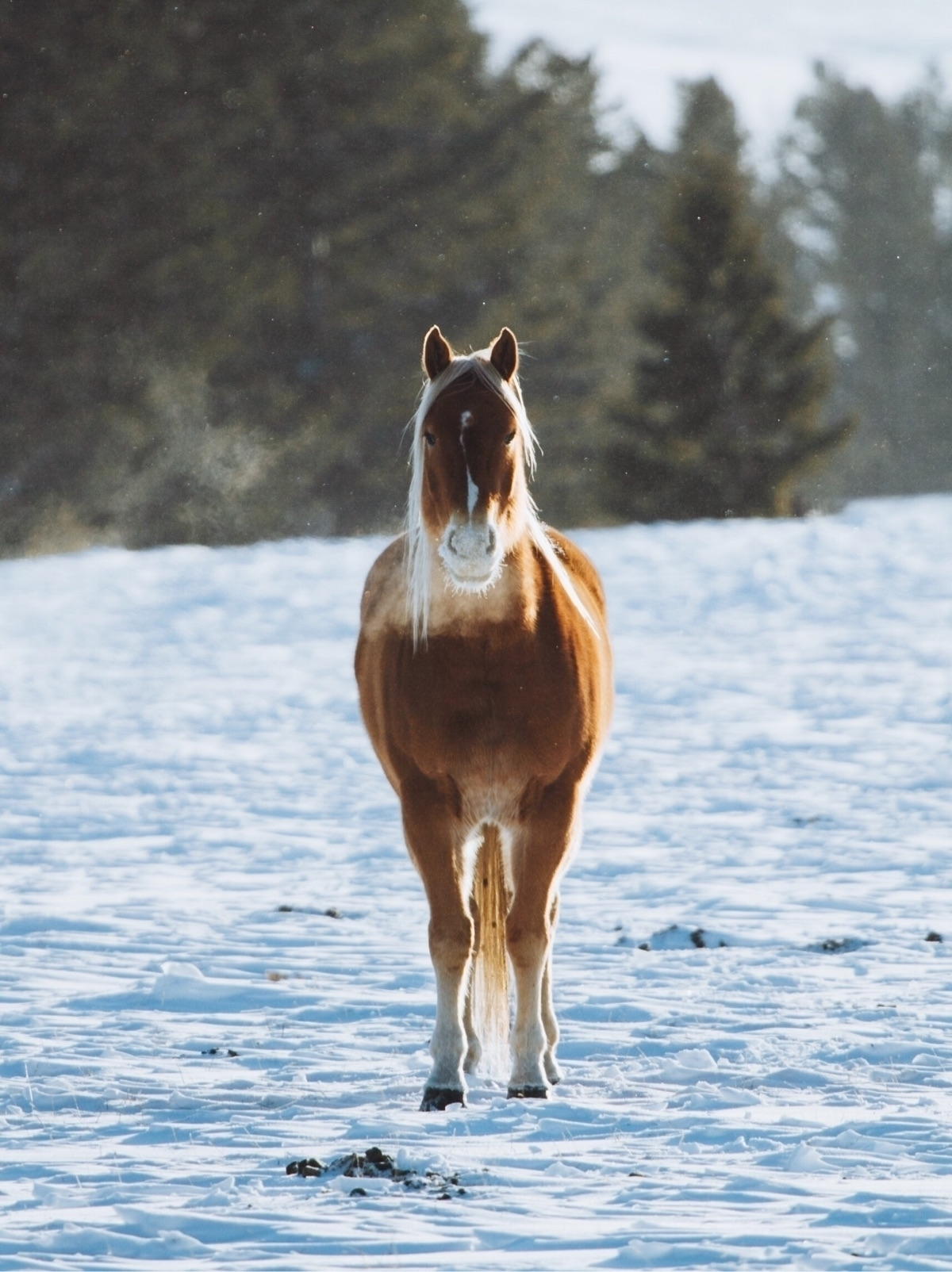 horse enduring cold days winter - chriscauble | ello