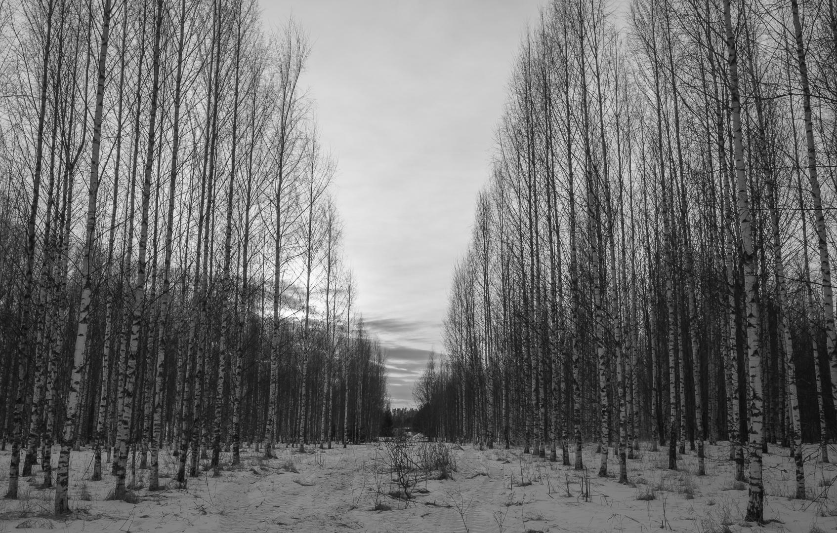 Naked trees - photography, landscape - anttitassberg | ello