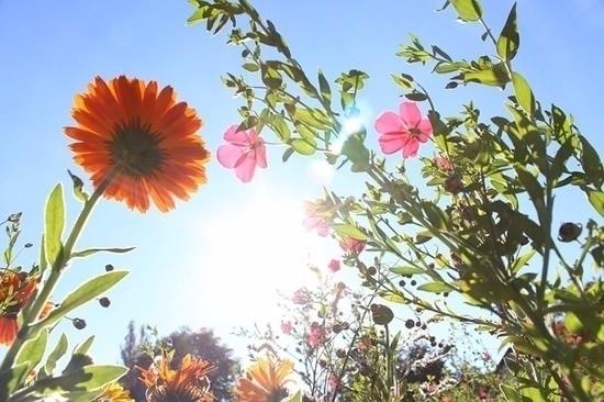 Happy Spring Equinox! officiall - symbolicliving   ello