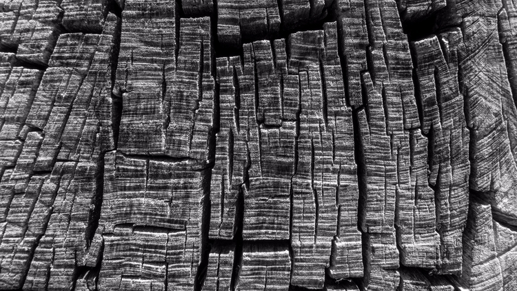 Lines Textures tree stump nice  - chrishuddleston   ello
