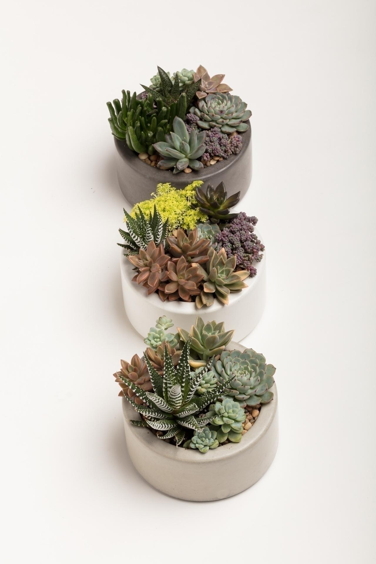 Handmade Concrete Planters 6 3  - opusconcrete | ello