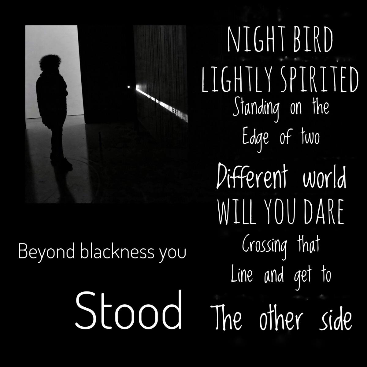 blackness Stood Night bird Ligh - thenmh | ello