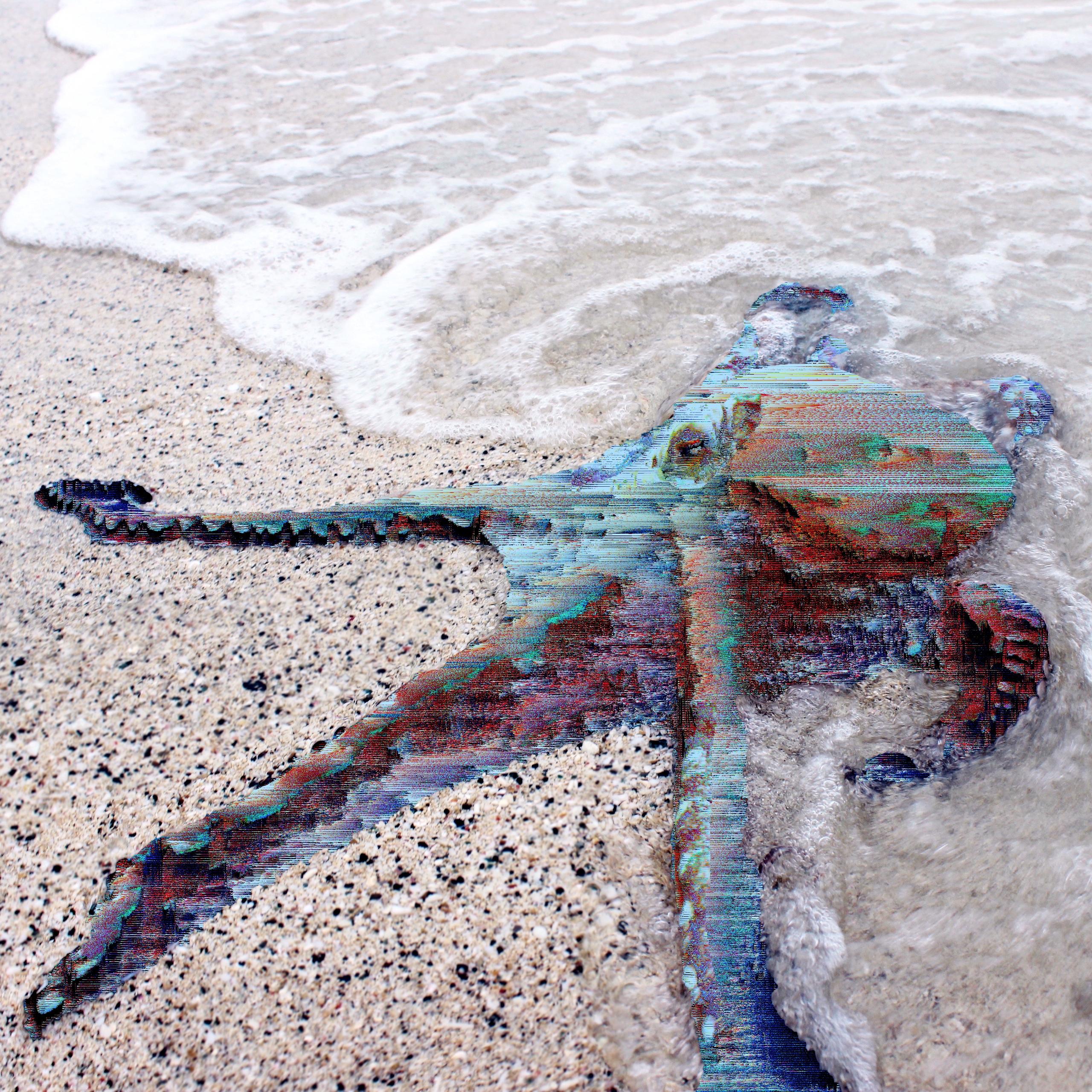 271/365 | - Octopus, Mollusca, Jlitch365 - jrdsctt | ello