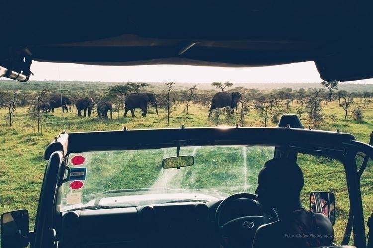 Wild Parade Elephants crossing  - francisdufour   ello