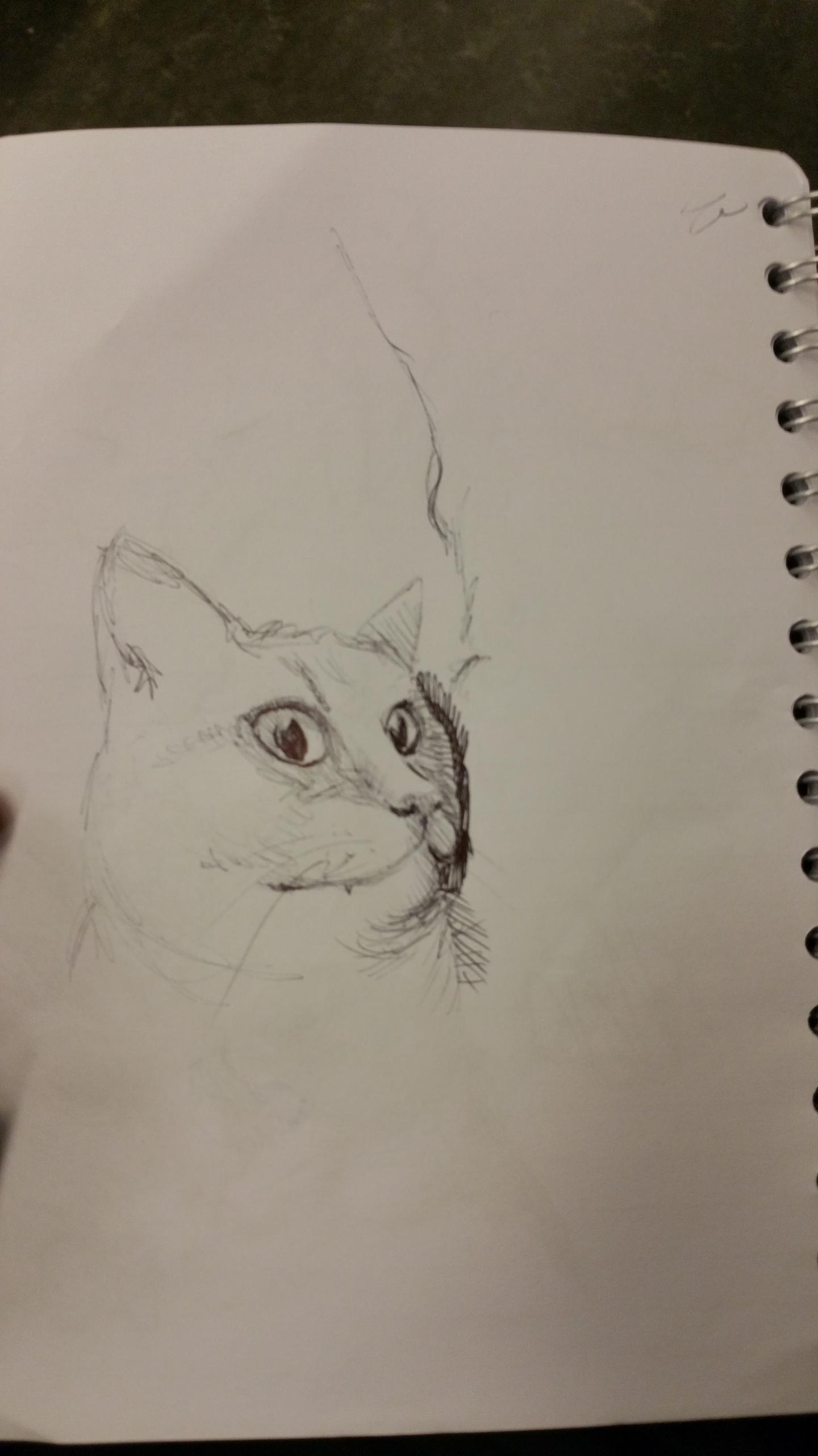 practice, cat - lienvliegmachien   ello