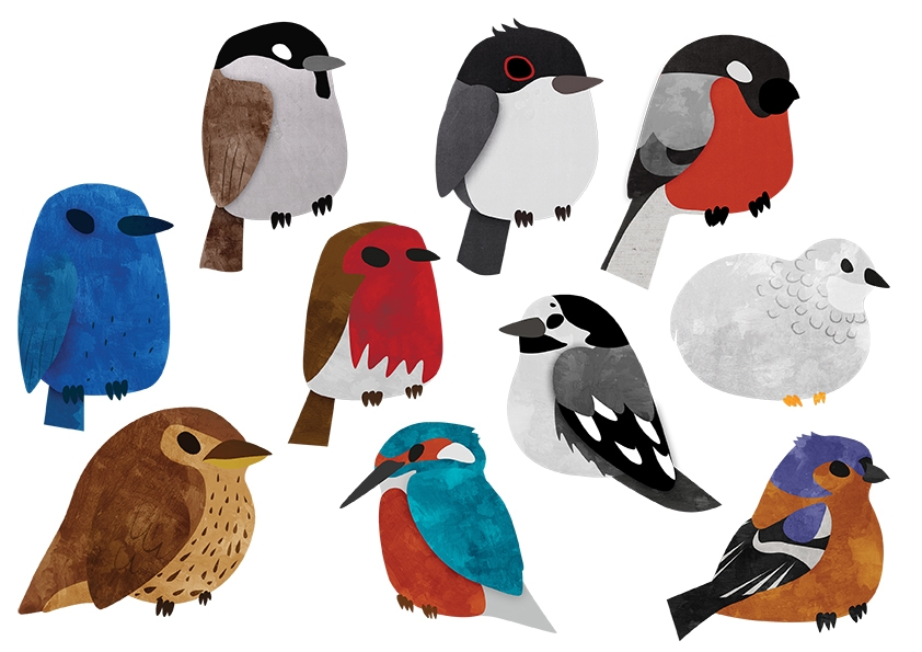 Bird Breeds - birds, breeds, vector - clairestamper | ello