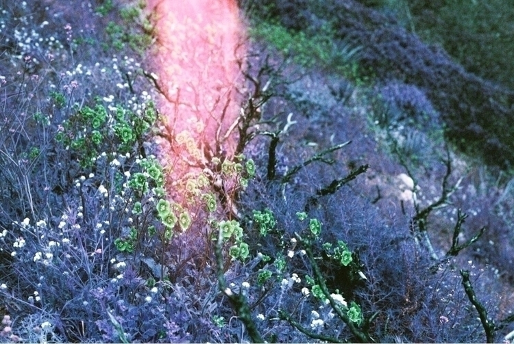Rose gold - shootfilm, film, 35mm - brianne-siegel   ello