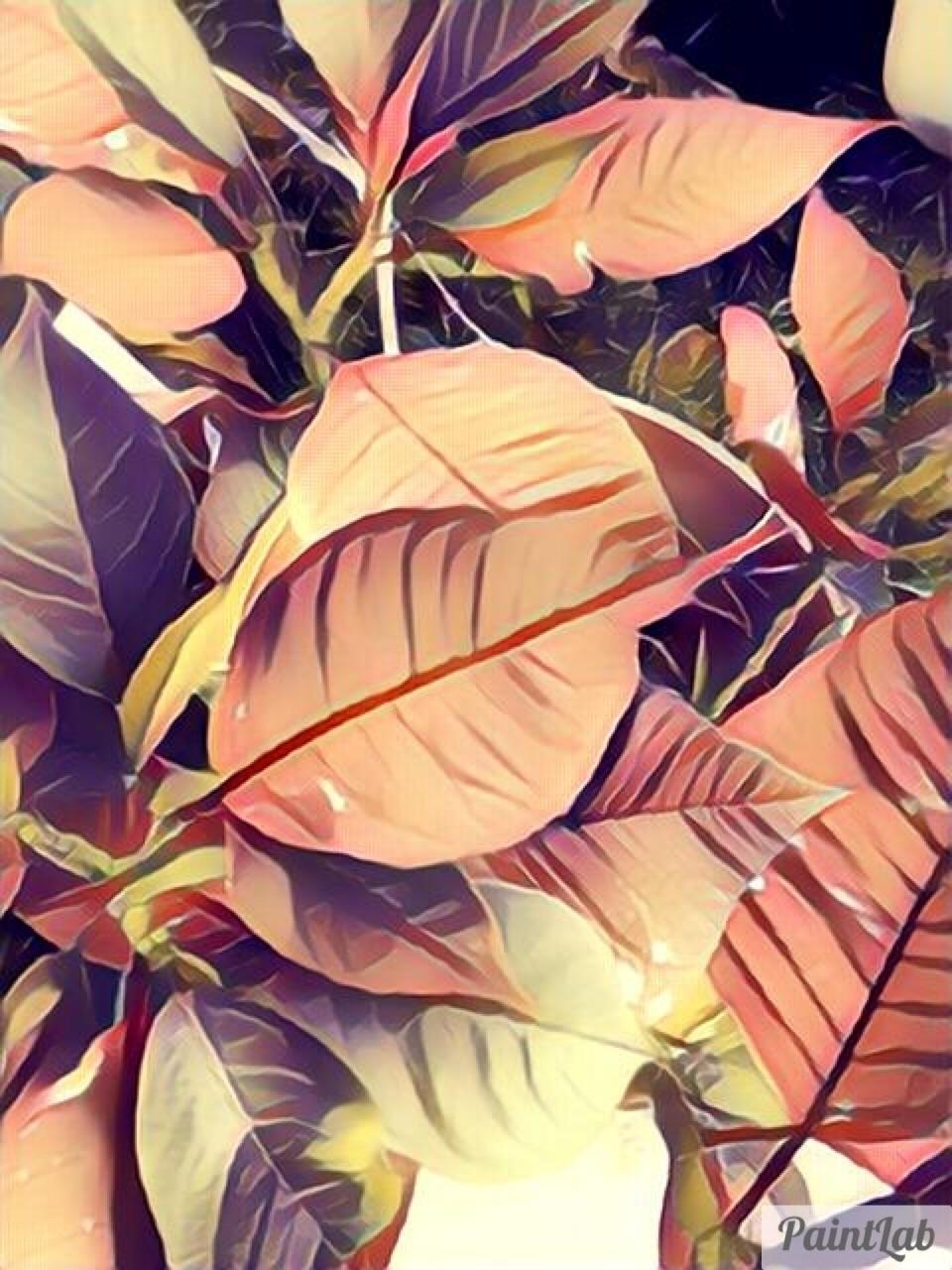 Springtime Plants Garden Apps - mikefl99 - mikefl99 | ello
