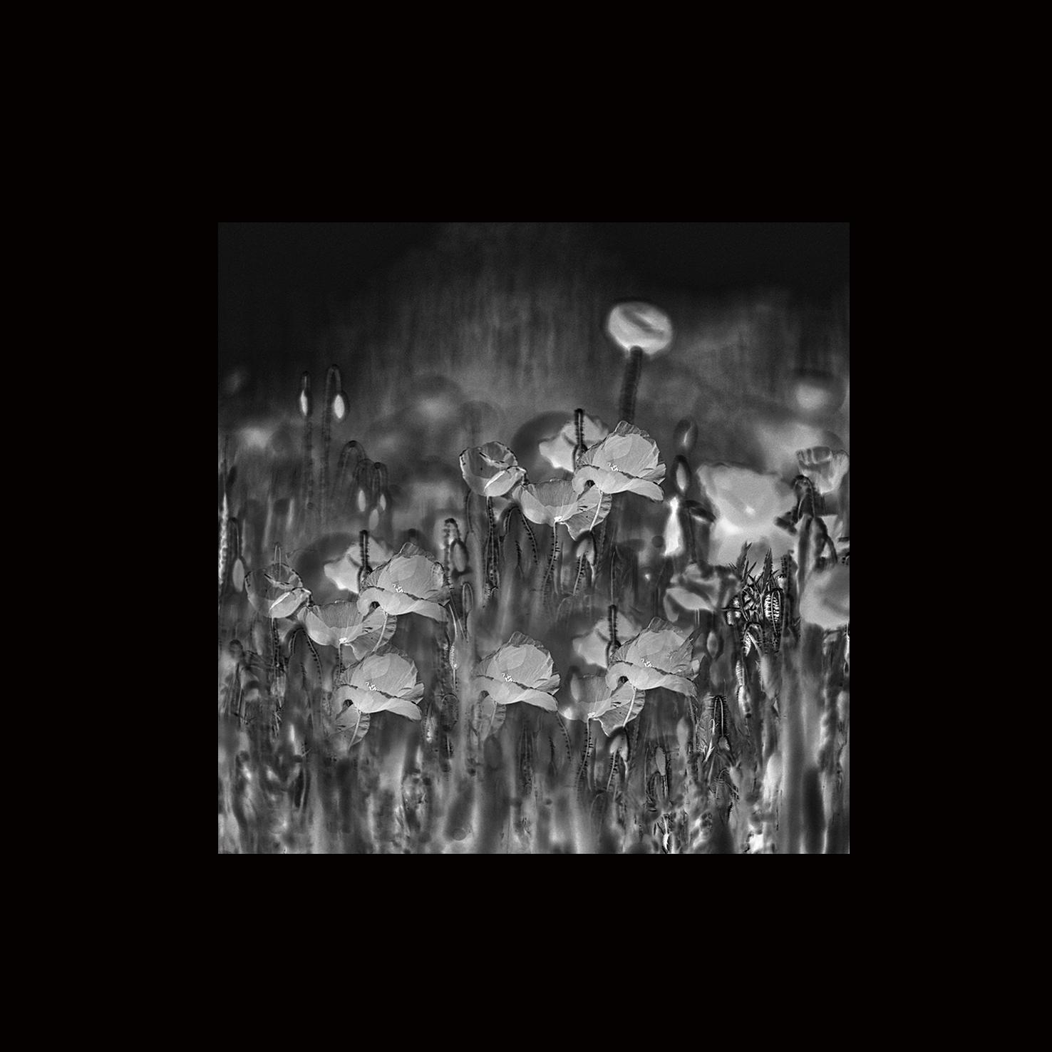 Poppy field - monique2211 | ello