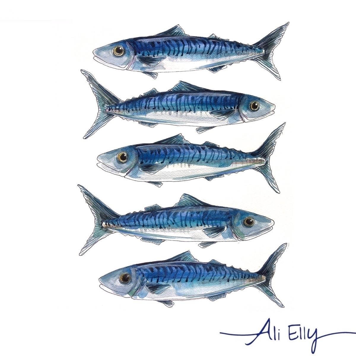 fish, design, blue, illustration - aliellydesign | ello
