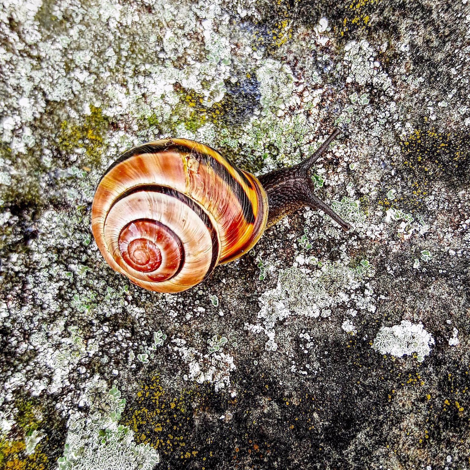 Snail - color, colorful, nature - klausheeskens | ello