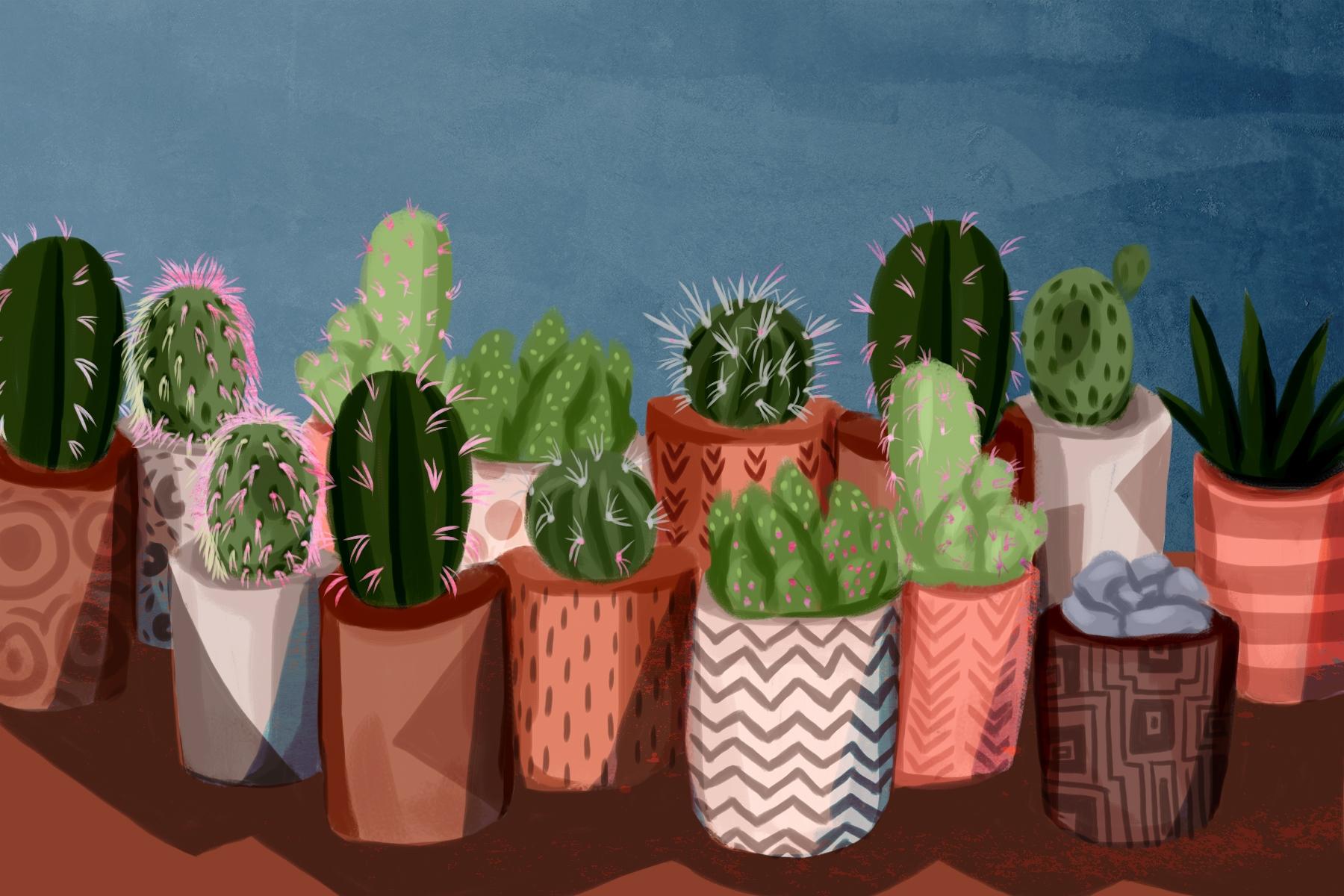 Cacti - cacti, plants, plantlady - cariguevara | ello