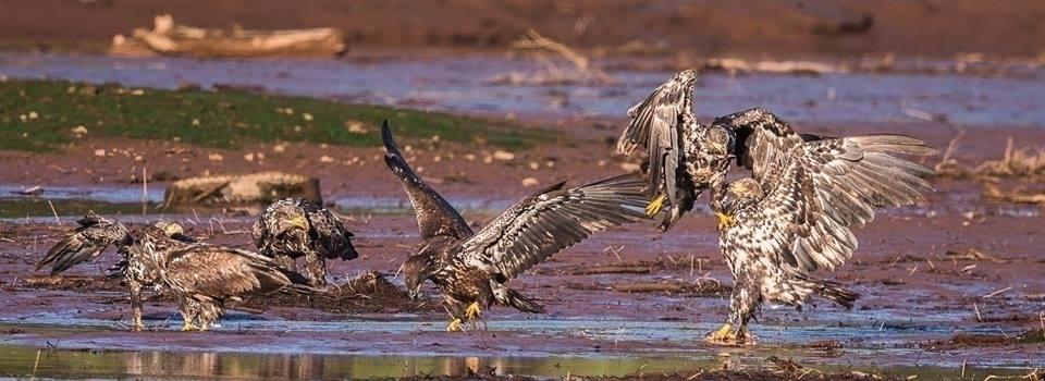 immature eagles place. river pl - tbiveteran | ello