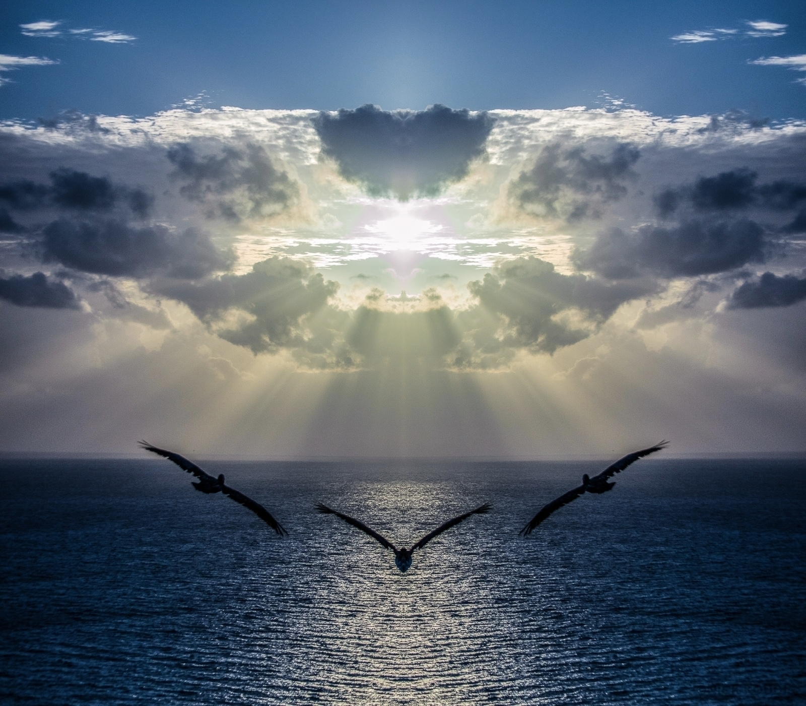 Pelicans soaring Mother Ship. c - koudis | ello
