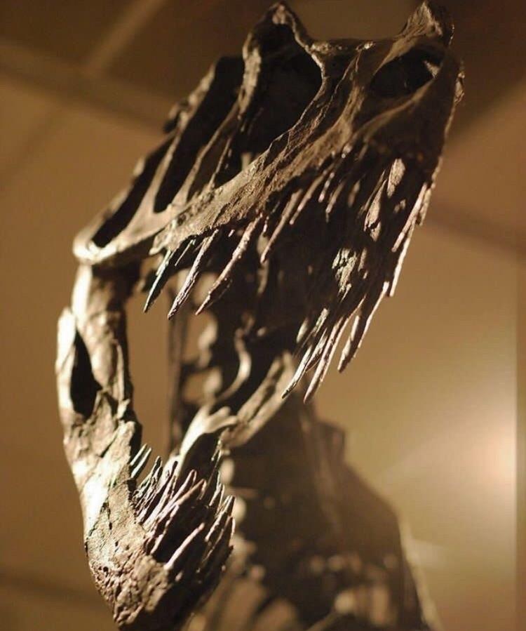 skull - dinosaur, dinosaurs, art - dinosaursart | ello
