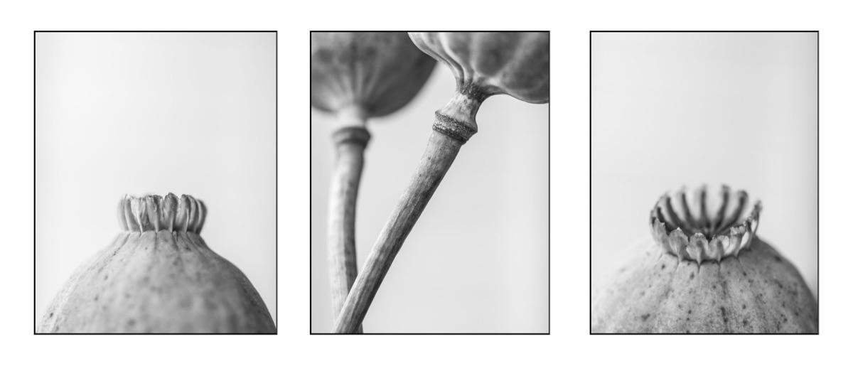 triptych - blackandwhite, nature - peter_skoglund   ello