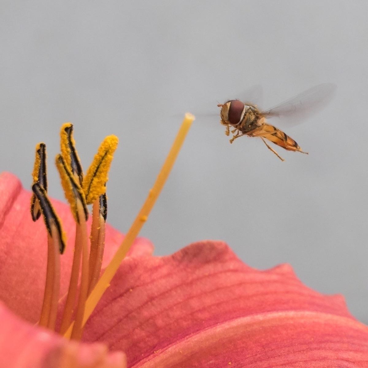 Saturday garden - nature, fly, insect - peter_skoglund | ello