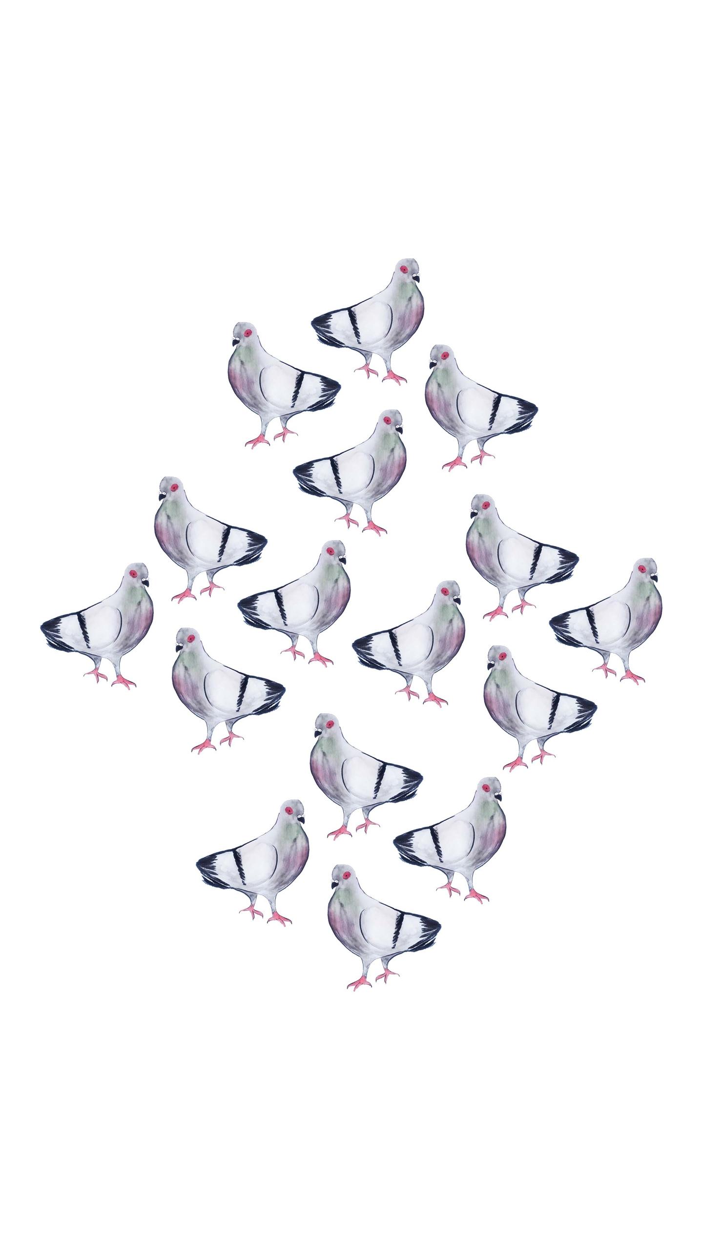pigeons aka flying mice - kseyes - kseyes_illustration | ello