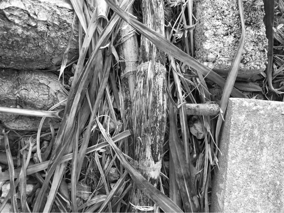 Dead Branches Apps https://ello - mikefl99 | ello