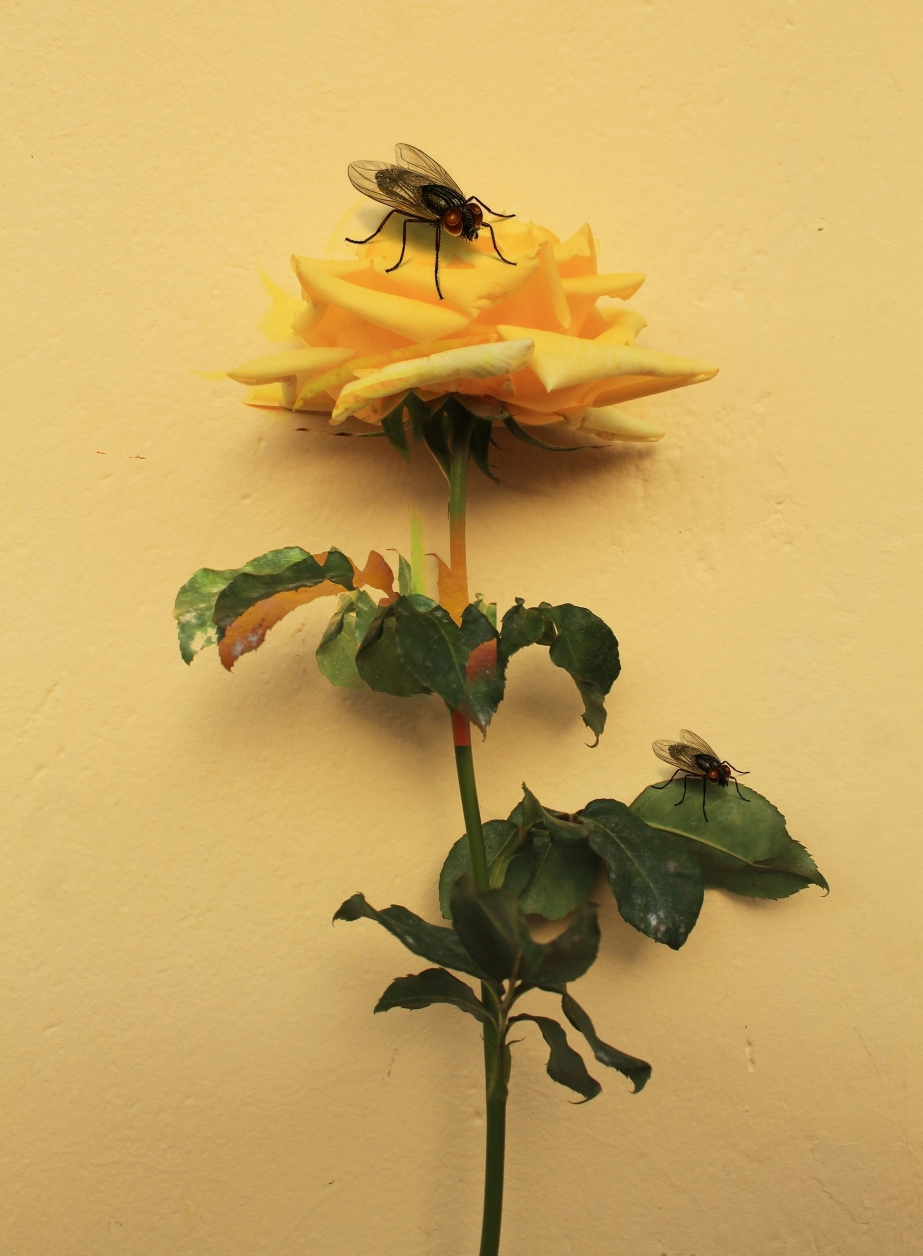 Spring - digitalcollage, flower - franalvez   ello