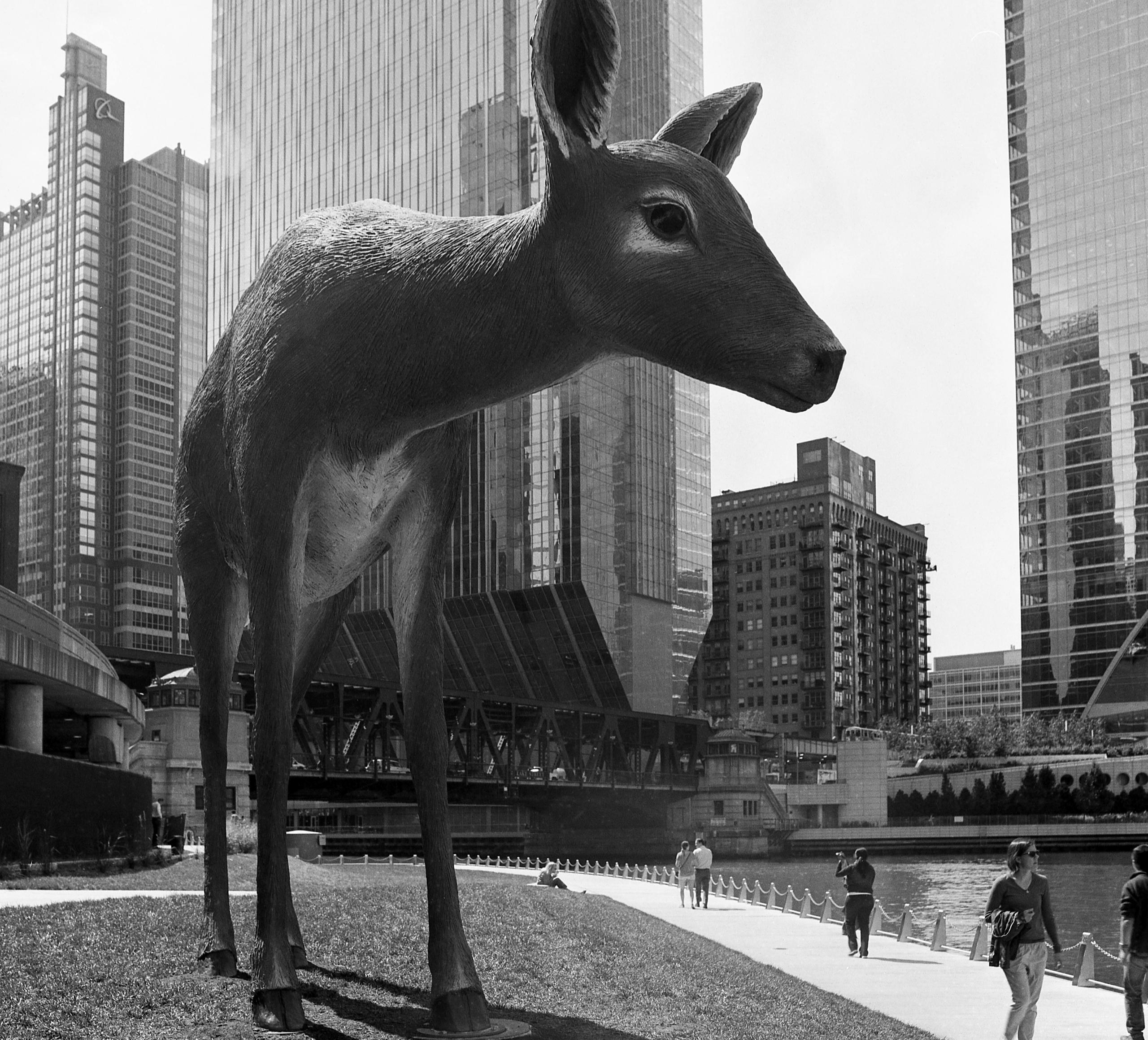 Big Bambi messed ears shot. 645 - junwin   ello