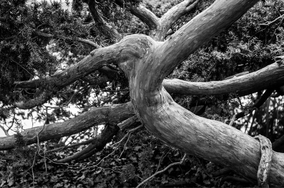 "Untitled, Woods"" woods white ph - petarmilic   ello"