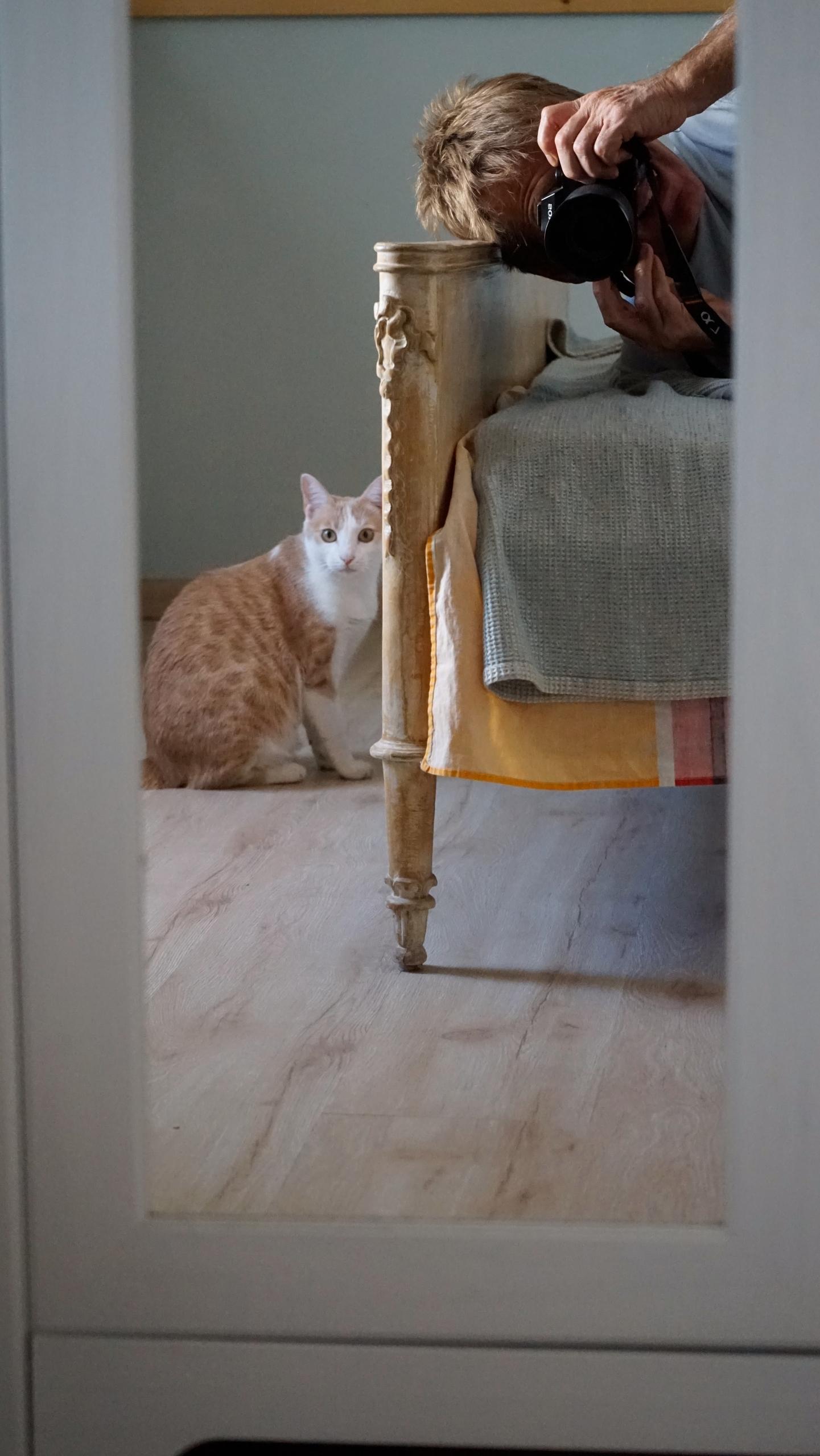 . Mitsos cat) photographed Pavl - pavlospassaris | ello