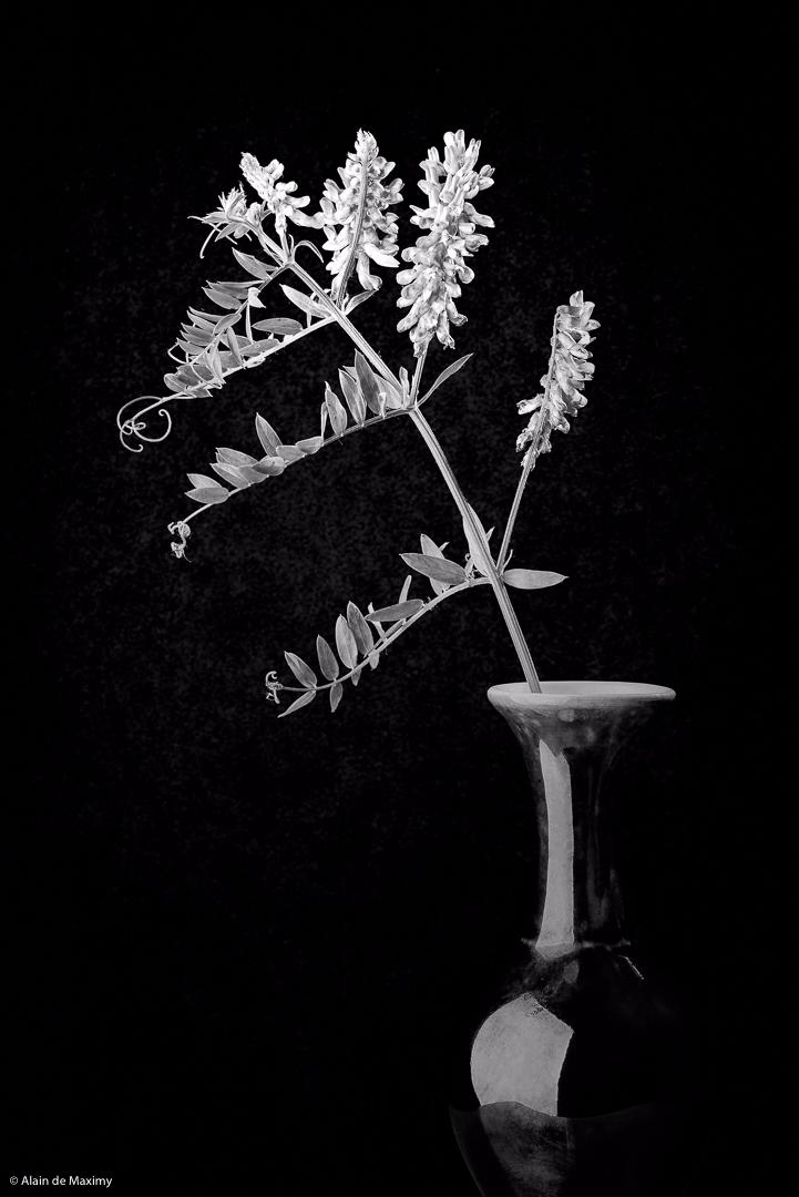 Alfalfa Vase Dark Background - alfalfa - maximy | ello