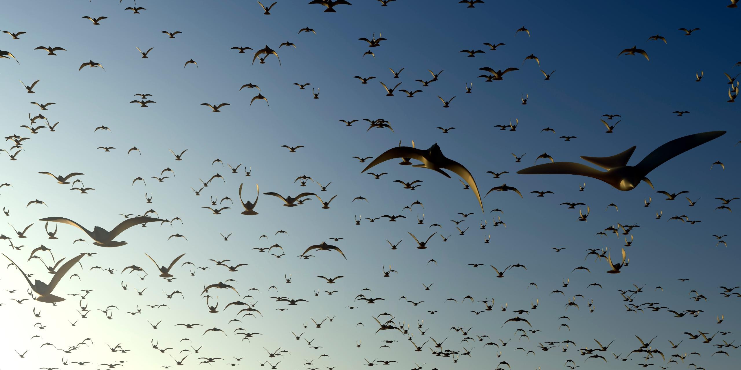 die Vögel kommen - matwe | ello