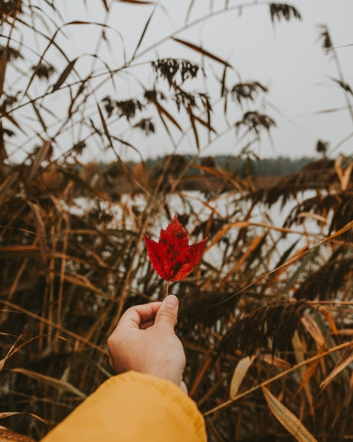 cliché autumn photo - ello, ellophoto - charles_collin | ello