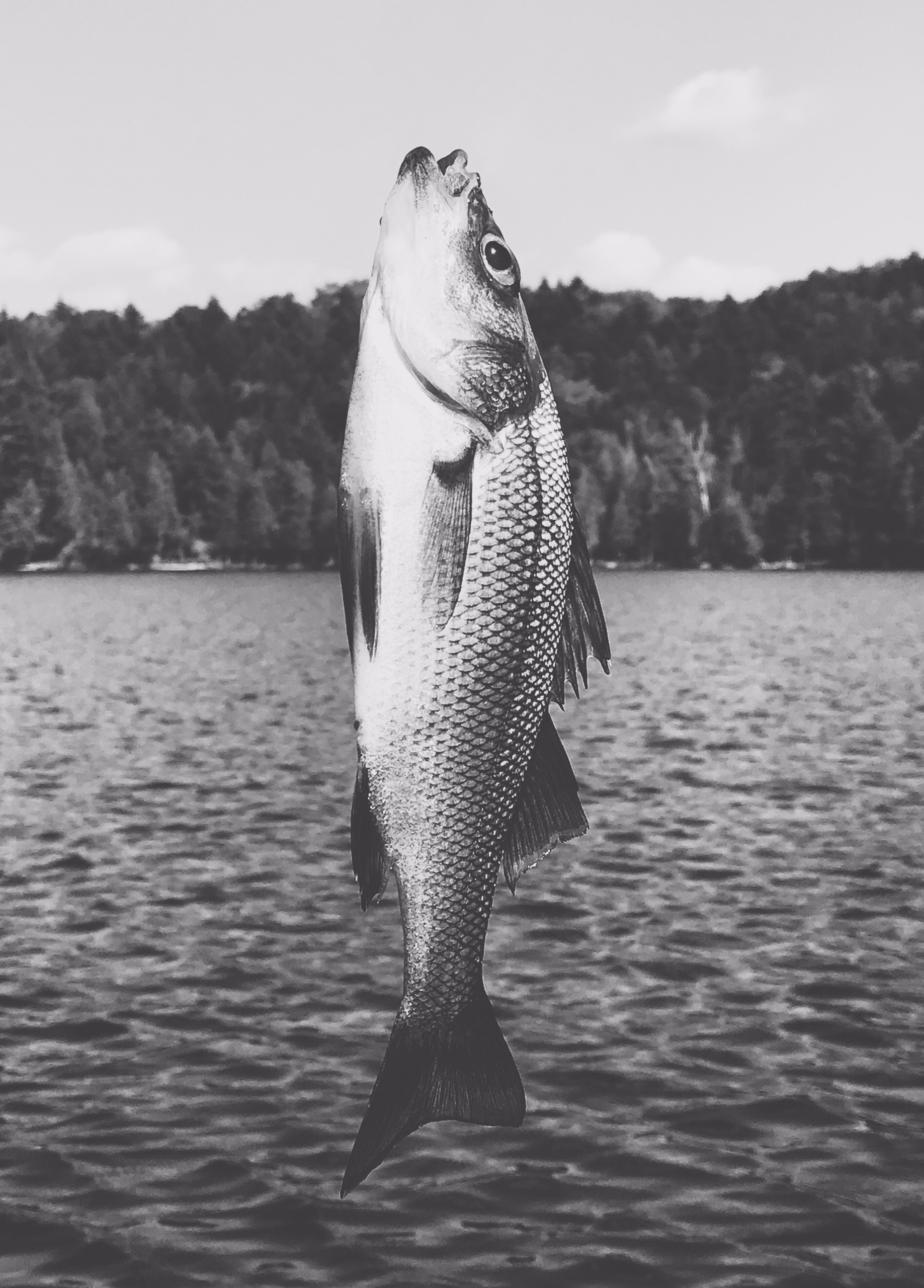 Fish. Moosehead Lake. Maine. Ca - sarros_photography | ello