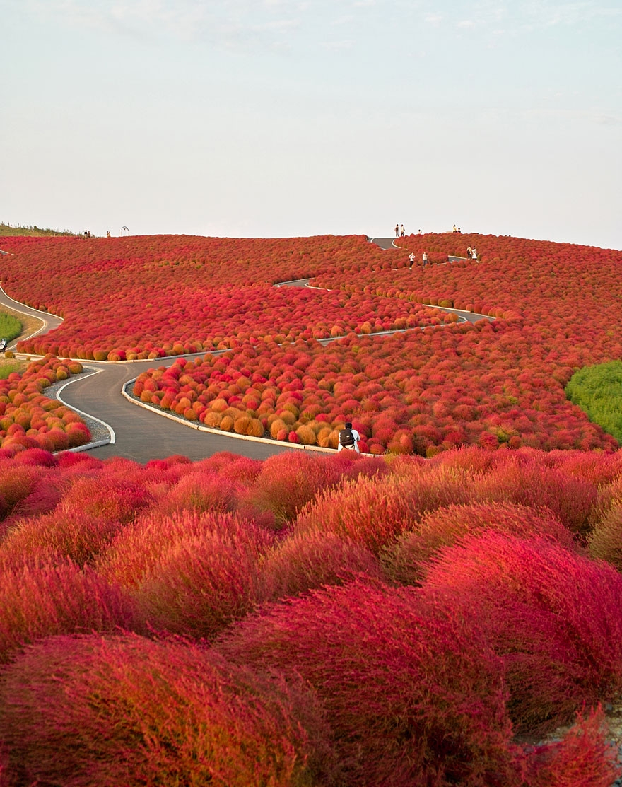 Hitachi Seaside Park, Japan - rutasdeviaje | ello