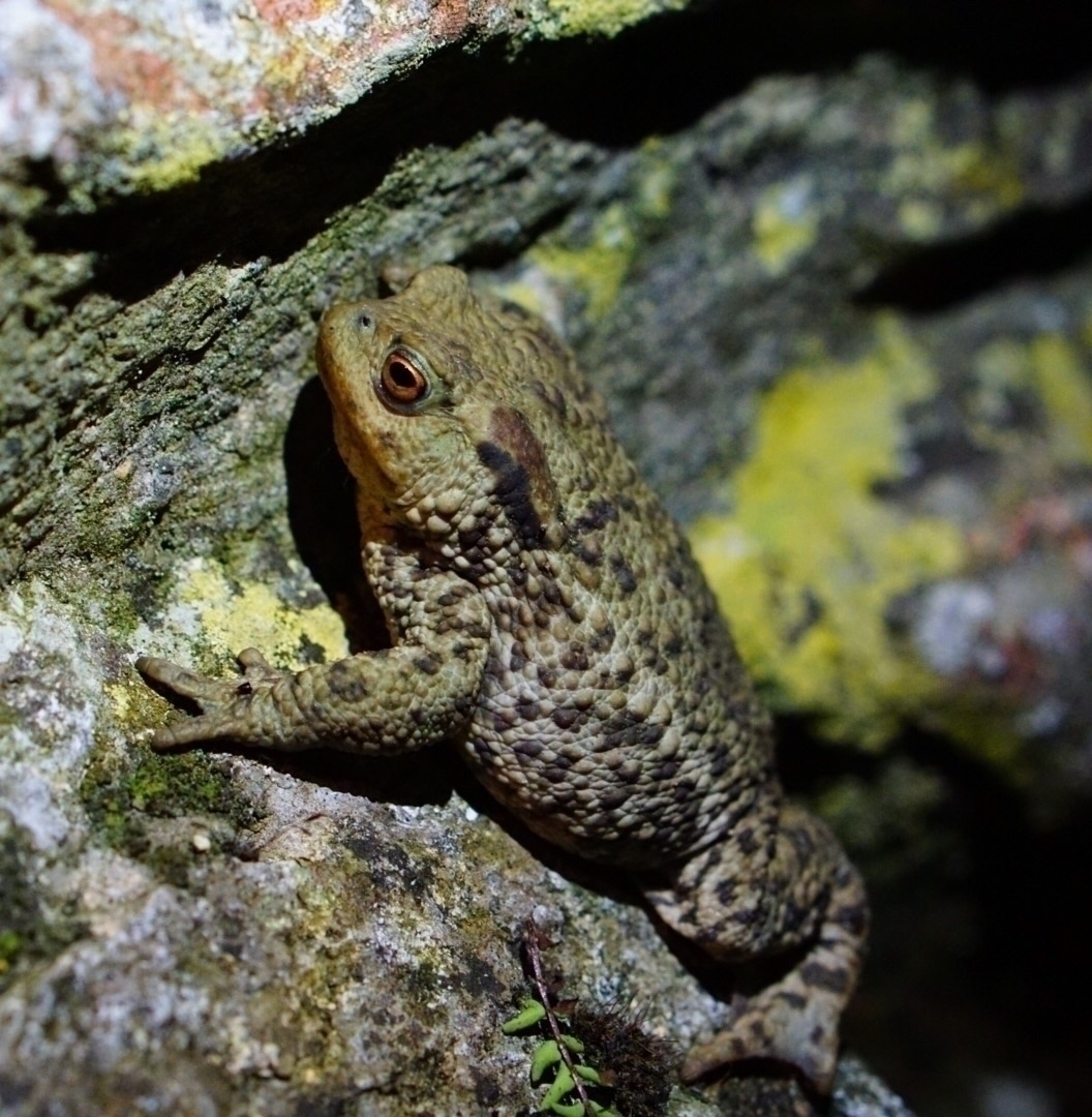 cracks. hibernating friend Toad - greyswan | ello