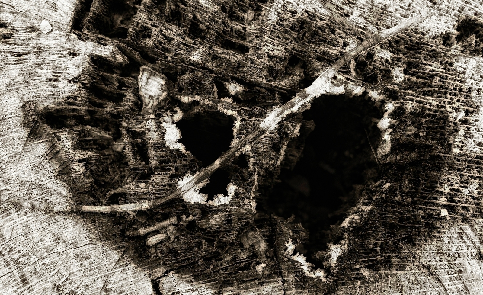 hole heartwood, tinted frost  - monochrome - docdenny | ello