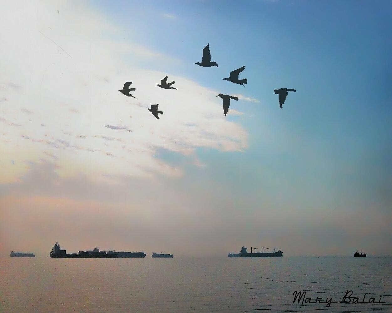 Shadows - photography, ships, birds - mairoularissa | ello